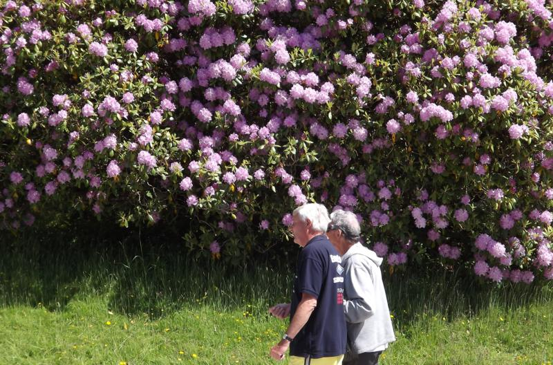 SPUD & HARRY BY A BEAUTIFUL RHODODENDRON