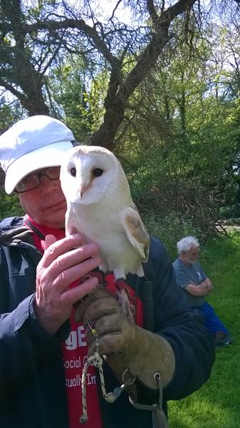 Ernest and the Barn Owl