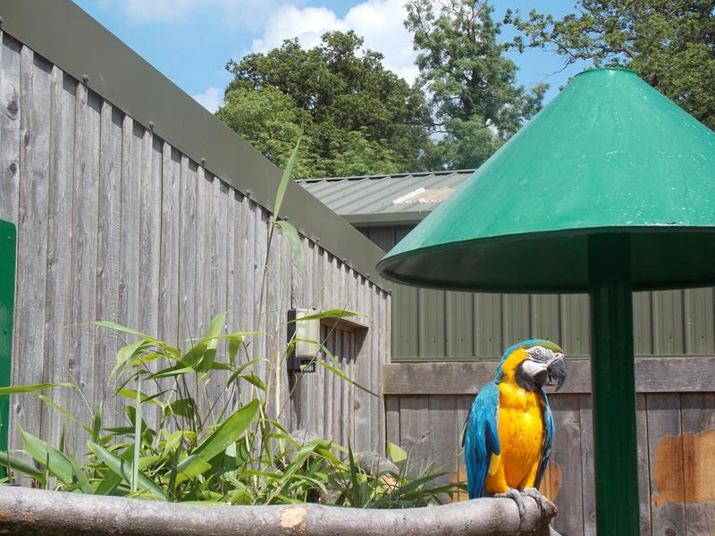 Macaw outside