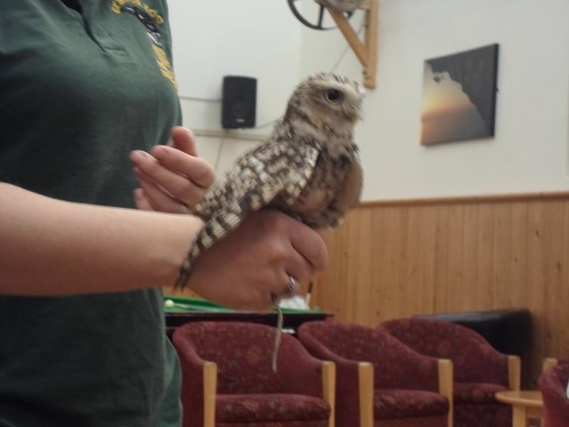 A baby owl