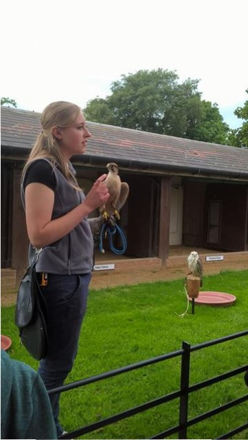 Emily, a lovely member of staff, holding a Harris Hawk