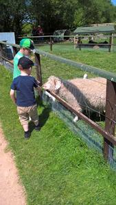 SAM AND MAX FEEDING ONE OF THE ANGORA SHEEP