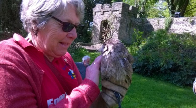 Slideshow: Ann holding Ballsey, a European Eagle Owl, Banwell Castle, May 2014.