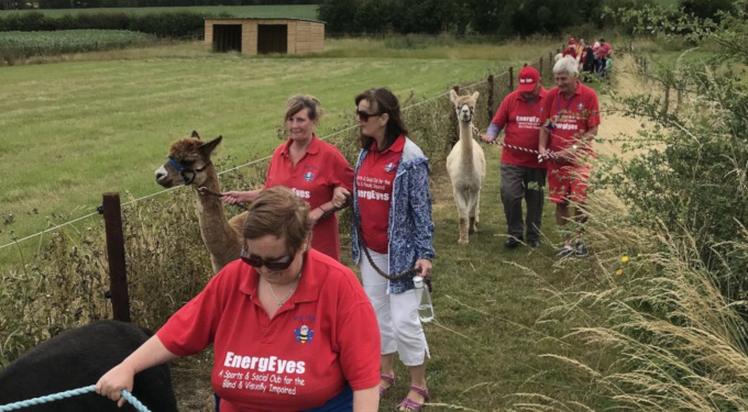 Slideshow: Walking with alpacas, July 2019.